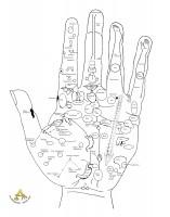 Reflexzonen der Hand